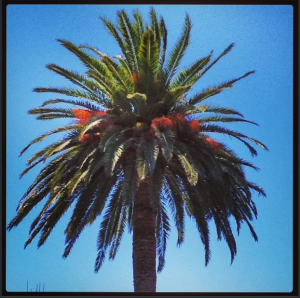 Sunshine and Palm Trees at Kona Tanning Orange County