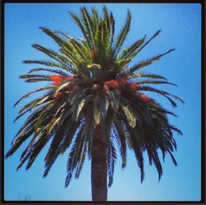 Sunshine and Palm Trees at Kona Tanning Orange County